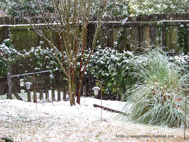 Blog-02-23-2010-snow