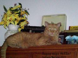 Blog-Bugsy-Nov