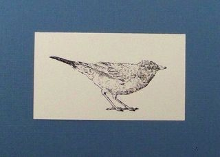 Blog-Bird1