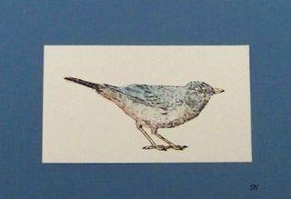 Blog-Bird2