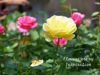 Blog-2-24-roses