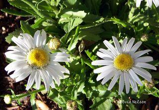 Blog-Flowers-2