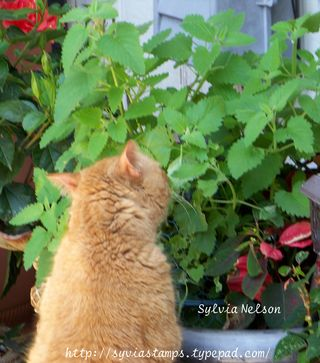 Blog-Bugsy-and-the-Catnip
