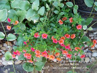Blog-Petunia's