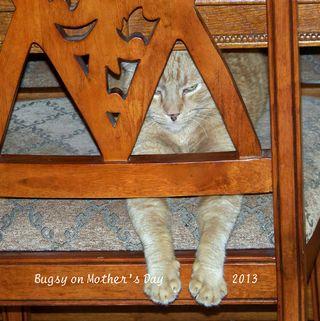 Blog-5-12-2013-Bugsy
