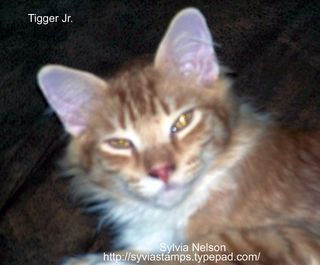 Blog-Tigger2a
