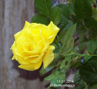 Blog-11-11-2014